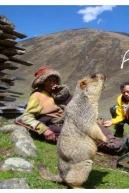 莫斯卡+甲居藏寨摄影3日全程越野