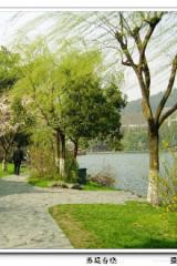 自由行第24期,西湖美景三月天,杭州西湖自由行