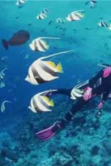 南澳珊瑚潜水 走入神秘的海底世界快艇出海烧烤BBQ