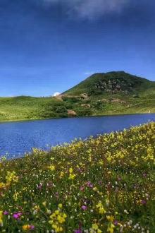 露营九顶山,花开正盛