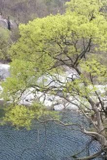 4月25日西峡银树沟一日游