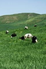 布尔智草原:亲近大自然—黑三户外烧烤活动日