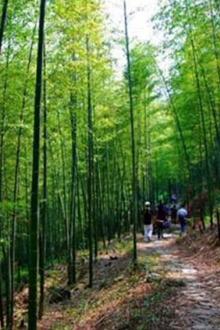 """广州最美户外线""""星溪线""""-逛竹林、赏花海,野炊开炉"""