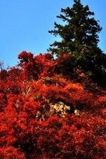 甘肃兴隆山秋景的徒步活动