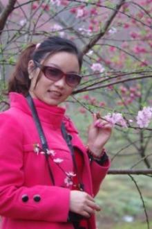 周日新丰樱花峪、广东最大樱花基地浪漫一日游