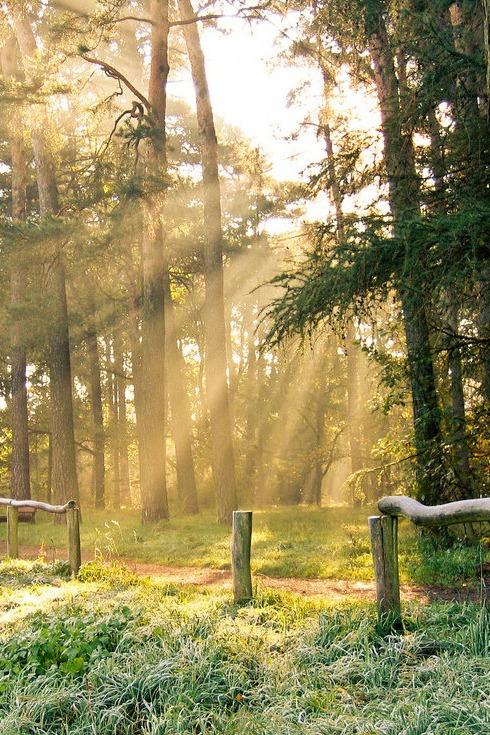 龙池森林公园露营烧烤篝火晚会徒步原始森林