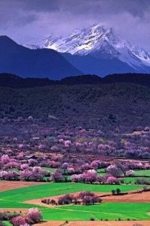 林芝-色苏庄园-雅鲁藏布江-桃花村;最精华的桃花之旅