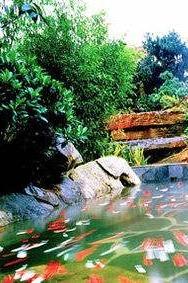 1月8日周日无锡惠山,樱花温泉一日游