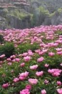 台山/宝泉景区/神州牡丹园4日游活动