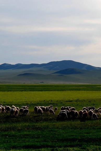 走进锡林郭勒大草原