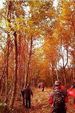 12月13日(周日)游神山古道赏红枫.