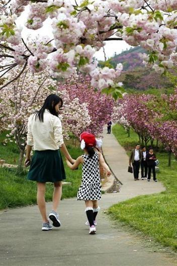 (樱爱而行):4月16日走蟹坑古道、赏杖锡樱花