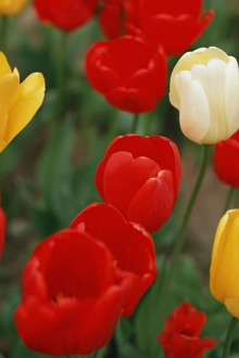 长沙省植物园赏花