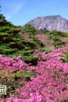 韩国五日游这个价不能再低了。