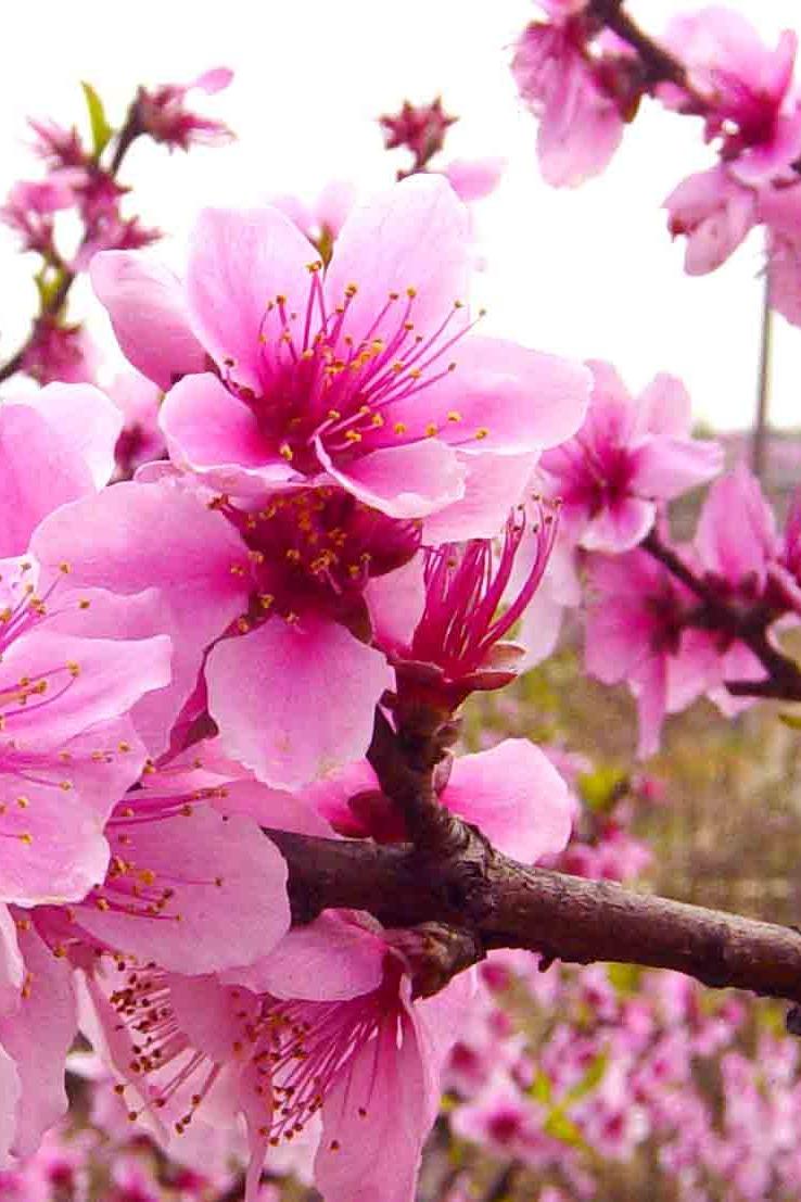 龙泉桃花会赏花摄影活动