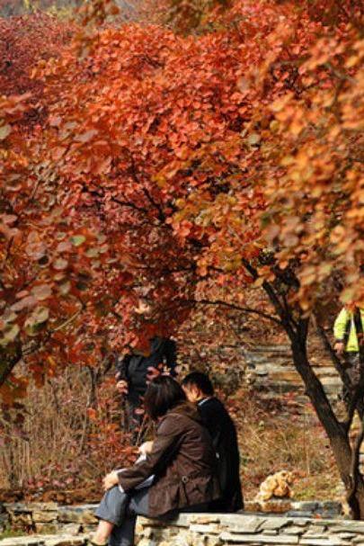 10月31号走进幽岚山风景区坡峰岭赏最美红叶