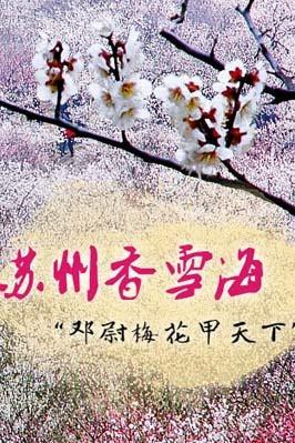 【拓荒人户外旅行】 十里梅花香雪海 第一智慧穹窿山