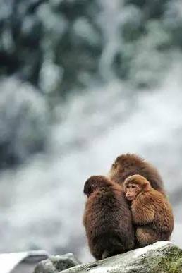 冬日观雪好去处 彭州卧龙谷