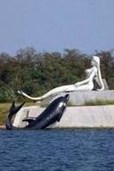 北戴河海滨+渔岛海洋公园二日游