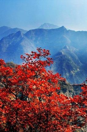 【高远户外】10月29日  逃票坡峰岭赏最美红叶