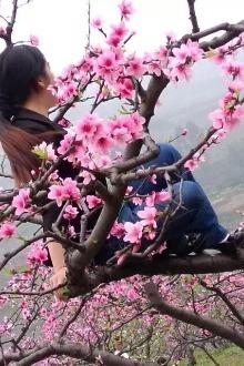 双福:仙牙桃花山【3月22日-星期天】、一日游!