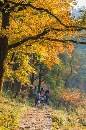 『寻秋季』 秋风起,我们去长兴十里古银杏长廊