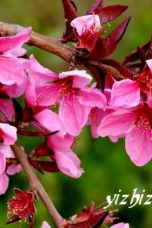 4月2日长清马山赏桃花、踏青、挖野菜休闲一日游