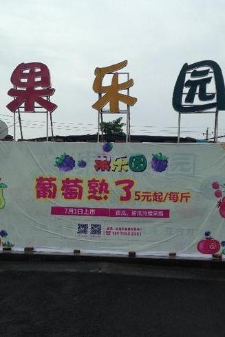 7月4日果乐园第一届葡萄采摘节