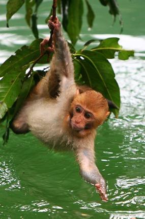 5月1号2号3号龙虎山戏猴一日游100闷