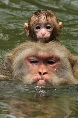 23号龙虎山戏猴休闲一日游88闷