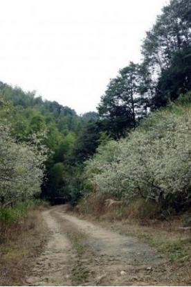 1月1日 从化星溪线 边走边赏梅
