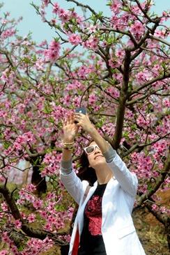3月27日周7 徒步龙泉桃花林  祈福好运石经寺