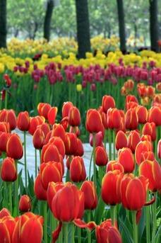 3月28日金卉庄园一日游