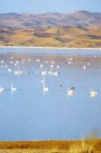沙漠风暴再次来袭——端午节腾格里沙漠穿越天鹅湖