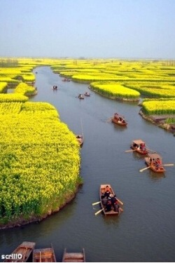4月8-10号 兴化千岛油菜花 李中水上森林