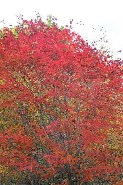 北京香山赏红叶、天云山玻璃栈道二日游