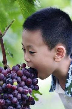 葡萄园DIY酿酒 +亲子葡萄自由采摘活动火热报名中