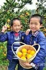 首推活动:蜜橘采摘,现榨橘汁,吃橘大赛、橘子大战。