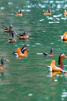 城市穿越之阳江版—-环鸟鸟湖徒步