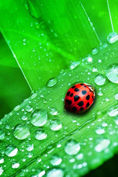 8月27日周六小小科考员活动—— 植物的奥秘