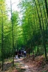 【从化徙步】3.27、感受最原生态的乡村美景