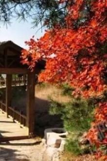 《红叶盛宴》石膏山帐篷节(10月17-18)两日!