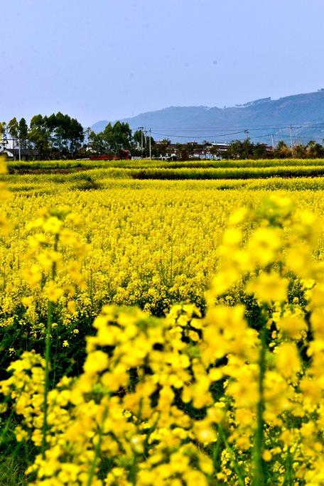【周末】葛仙花园沟乡村玩耍共赏春色