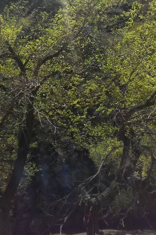 和林南山公园赏芍药花一日游