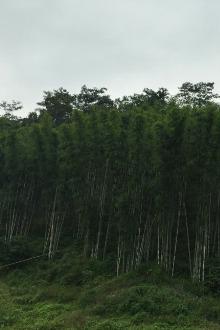 2016年4月10号油麻山穿越华峰寺