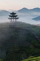 观万亩茶园,体验采茶,制茶,户外拓展项目