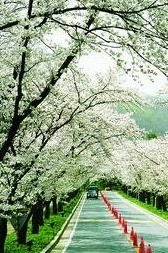 韩国6天济洲岛(首尔)