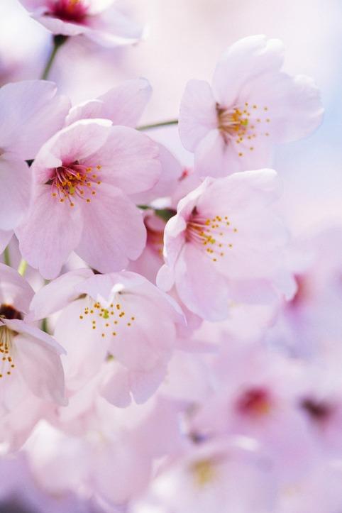 春天 ? 赏花  赏景  赏春色