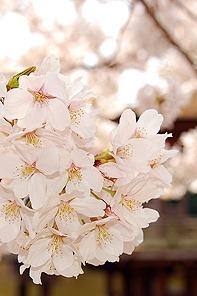 春天 ? 幸福像花儿一样