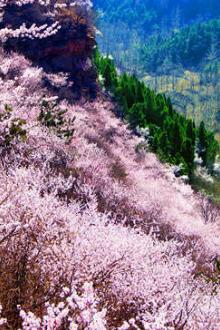 春暖花开,期待与你走进世外桃源